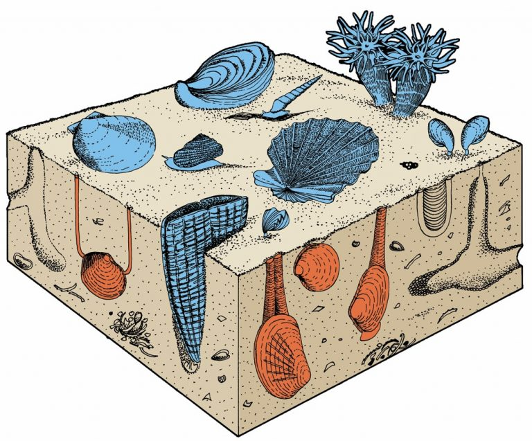 Oysters, scallops, and brachiopods competing for space on the seafloor