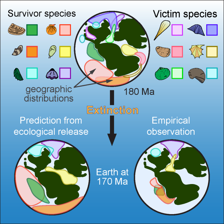 Maps showing survival and extinction of Jurassic species in different scenarios